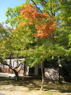 Kyoto071103_09