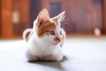 Cat071124