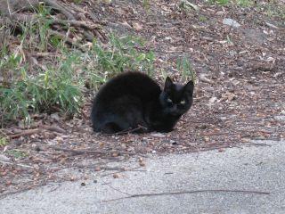 Cat071209
