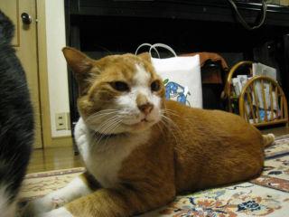 Cat071229_02