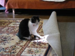 Cat071230_03