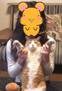 Cat080101_03