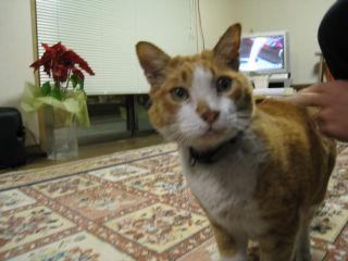 Cat080221_02