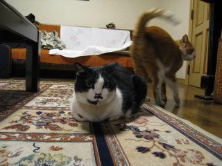 Cat080320_01