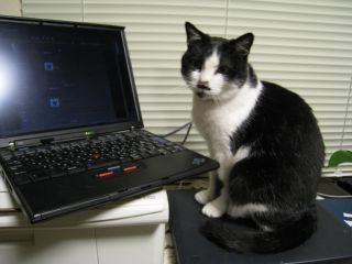 Cat080320_03