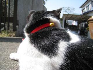 Cat080320_09