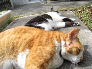 Cat080322_01