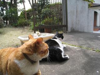 Cat080322_03
