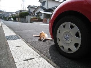 Cat080322_09