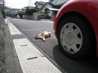 Cat080322_10