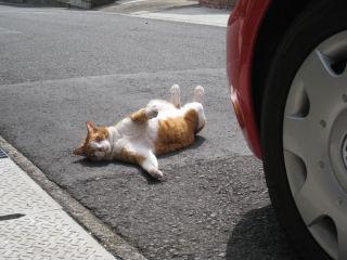 Cat080322_11