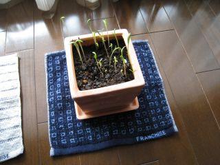 Garden080324_01