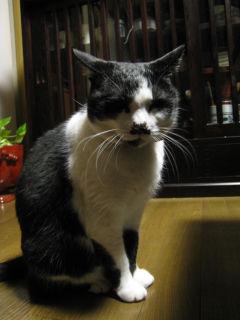 Cat080328_01