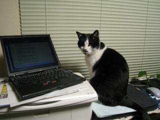 Cat080328_02