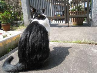 Cat080329_01