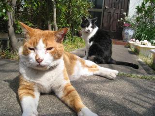 Cat080329_06