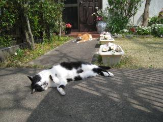 Cat080330_01