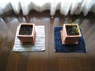 Garden080401_01