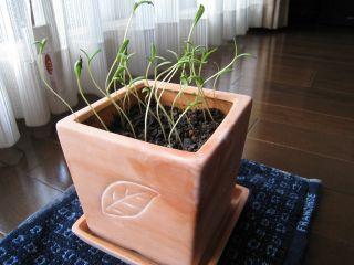 Garden080401_02