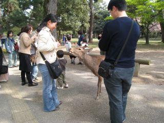Nara080412_18