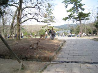 Nara080412_27