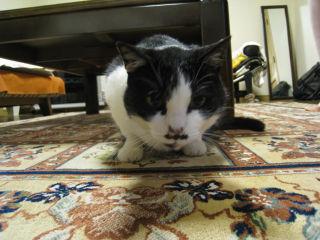 Cat080424_01