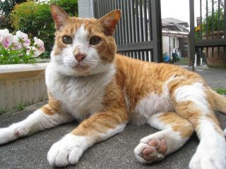 Cat080426_08