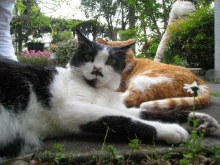 Cat080426_09