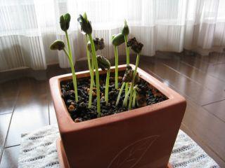 Garden080626_01