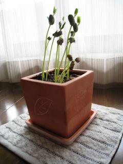 Garden080627_01