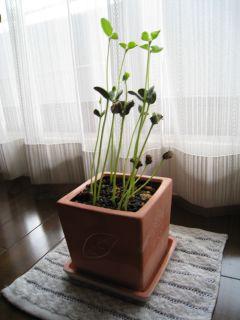 Garden080628_01