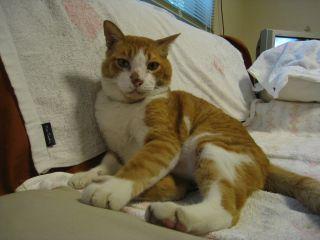 Cat080713_12