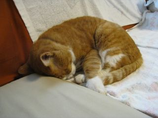 Cat080713_18