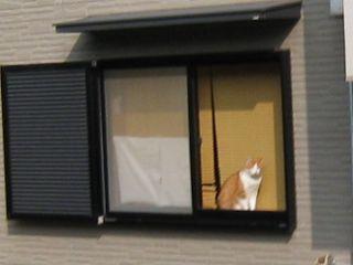 Cat080801_02