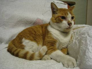 Cat080816_03