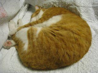 Cat080816_10