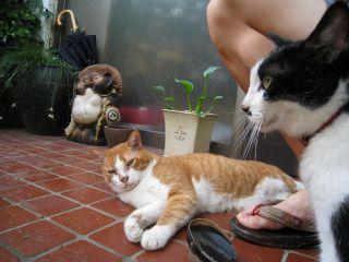 Cat080817_01