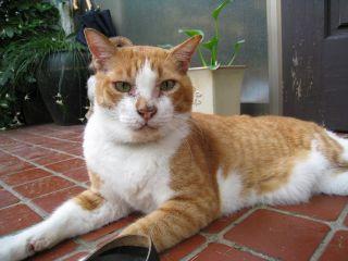 Cat080817_03
