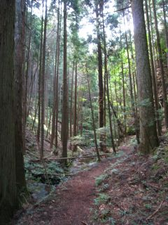 Kyoto080906_28