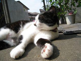 Cat081011_01