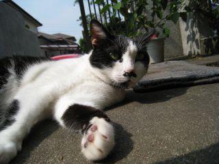 Cat081011_02