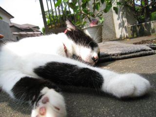 Cat081011_03
