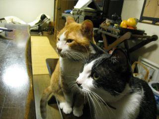 Cat081011_07