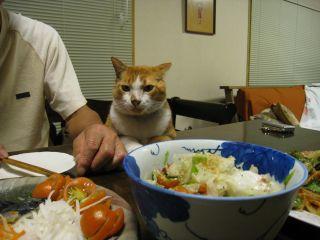 Cat081011_08