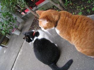 Cat081012_01