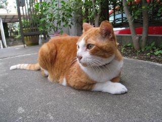 Cat081012_05