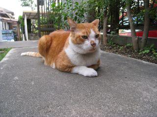 Cat081012_06