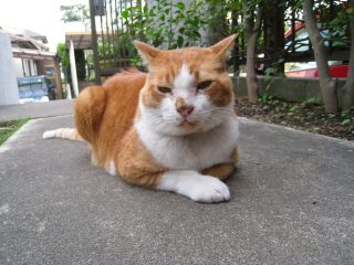 Cat081012_07