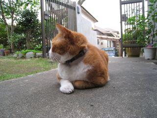 Cat081012_08
