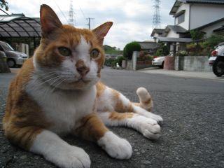 Cat081012_09